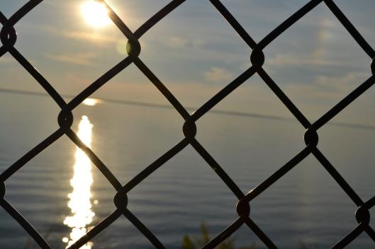 focused on the fence